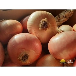 Cipolla Ramata di Montoro bio vendita online GB Agricola